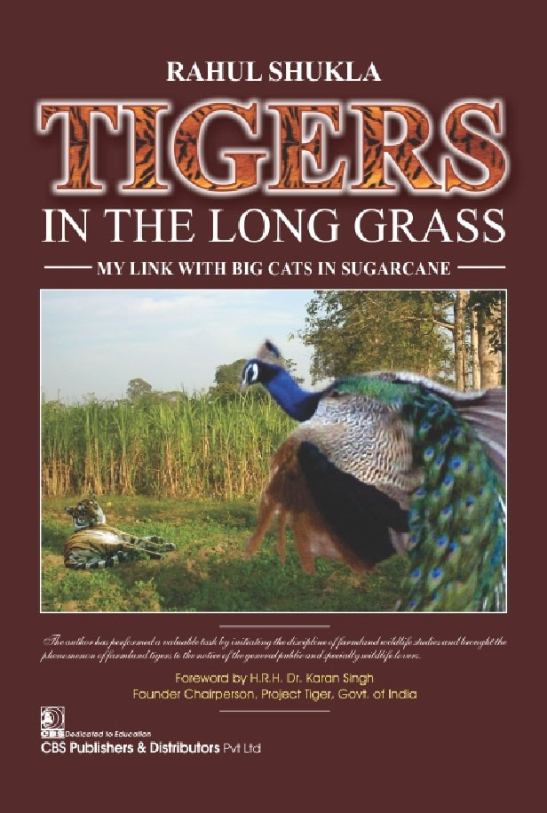Tigers in the long grass my link with big cats in sugarcane