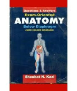 Exam Oriented Anatomy Below Diaphragm: Questions & Answers